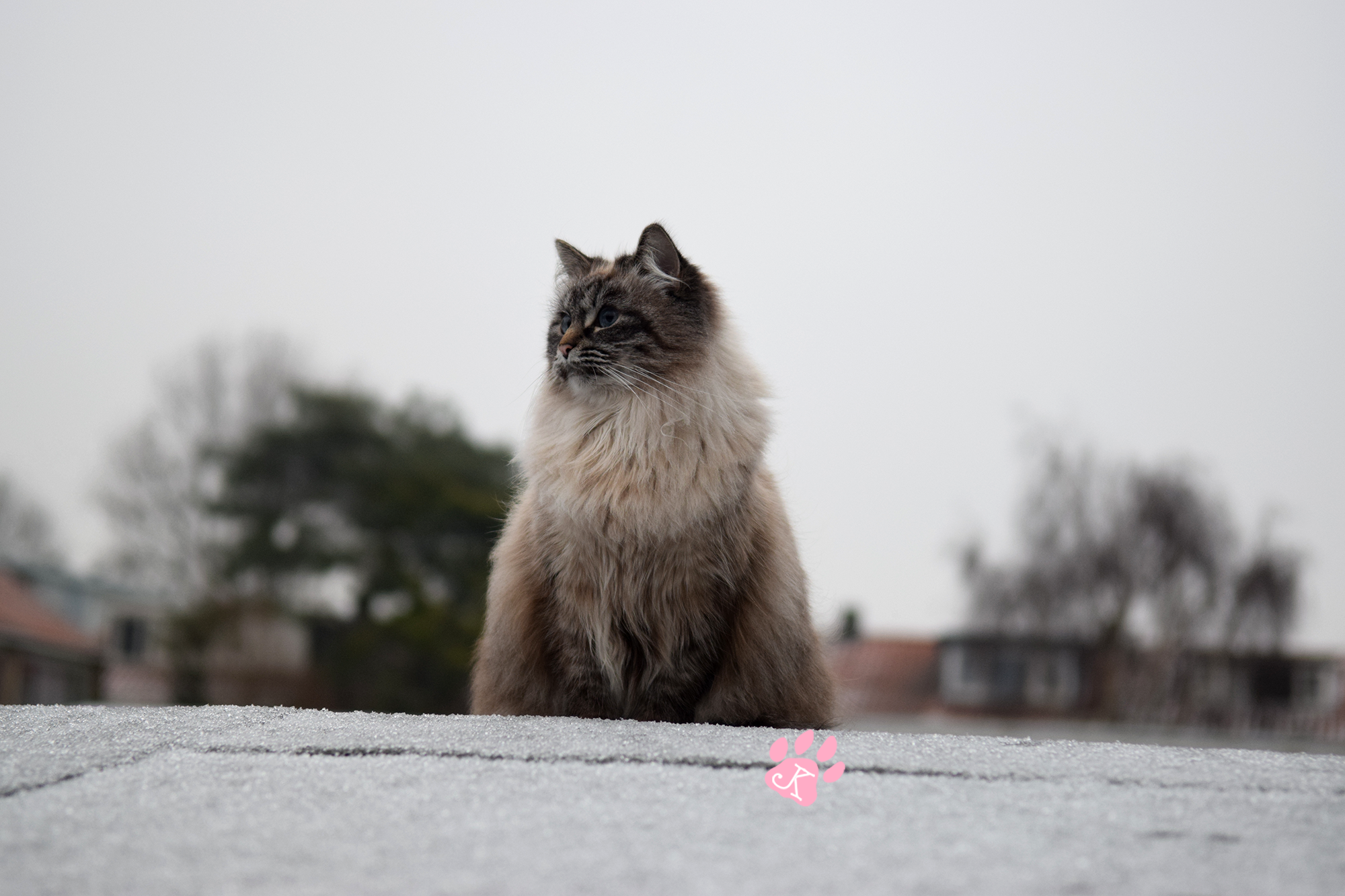 image-junethekitty-snow2017-04