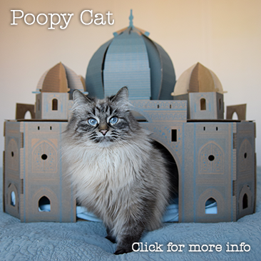 Poopy cat
