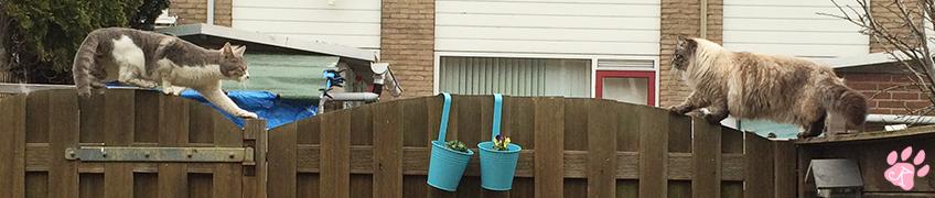 Blogimage-fence-01