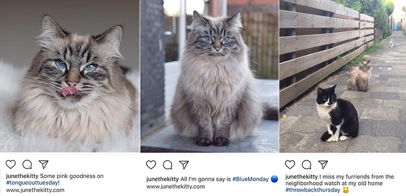 Image-blog-junethekitty-hashtags-1