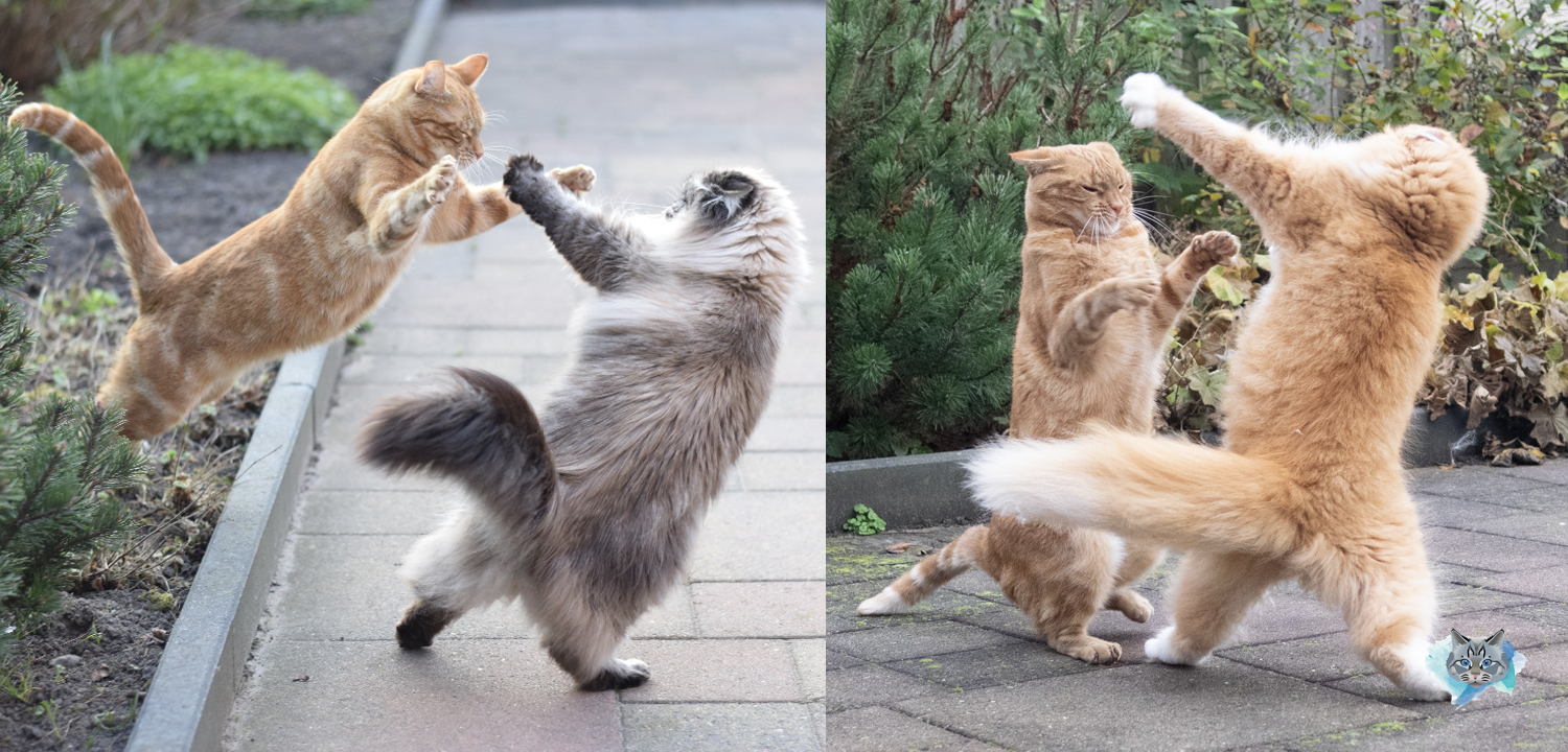 We are ninja cats: watch our best moves